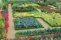 Trend of kitchen gardening witnesses upsurge in federal capital