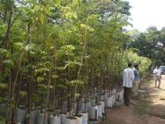 Forest deptt to supply 2m saplings in April
