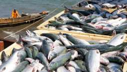 Fishing Venue in the offing for national, global markets outreach