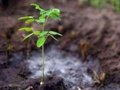 Forest deptt plants 204,594 saplings during plantation drive at Faisalabad