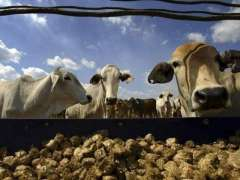 Farmers' training essential for promoting of Livestock in Balochistan: Director General