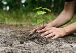 2.48 mln saplings planted during Plant for Pakistan Day campaign: National Assembly told