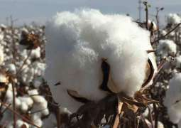 Senate Committee for bringing back Cotton Research Centre under Textile Ministry