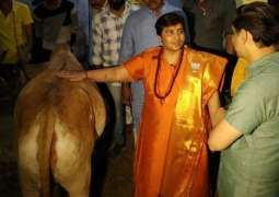 BJP candidate claims cow urine cured her breast cancer