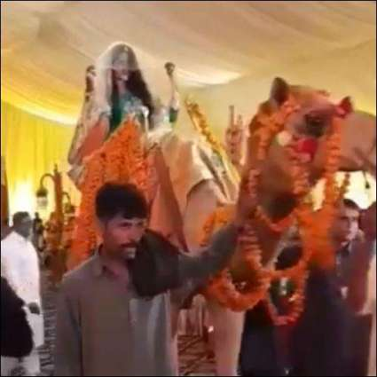 Pakistani bride enters her wedding on camel and we are shook!