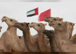 UAE to participate in Tan-Tan Moussem in Morocco