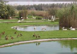 Sharjah's Wasit Nature Reserve recognised as 'Wetland of International Importance'