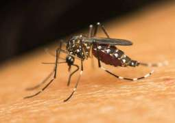 Tally of dengue cases rising alarmingly