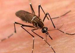 Number of Dengue patients rises in twin cities