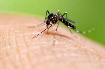 348 more dengue cases reported in Punjab