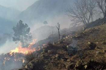 Several incidents of forest fires occurred in KP