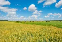 Taxing agriculture can reduce poverty, unemployment