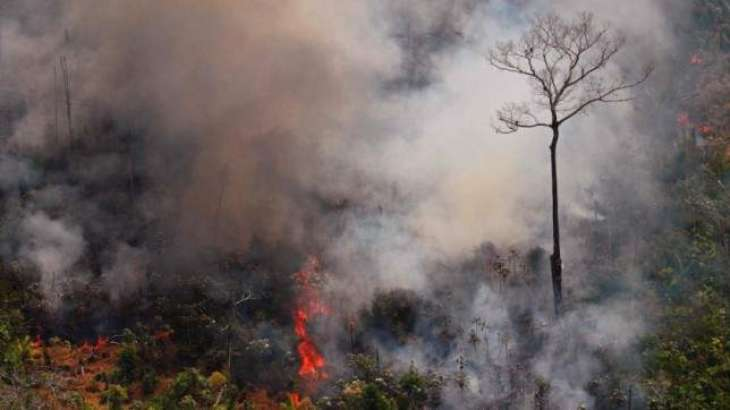 Colombian President Pledges to Plant 180Mln Trees in Wildfires-Hit Amazon