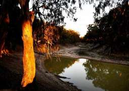 Thirst turns to anger as Australia's mighty river runs dry