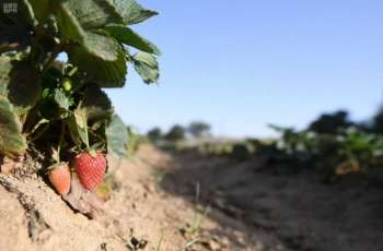 مشروعات تنموية متجددة تنعش قطاع الزراعة في عسير