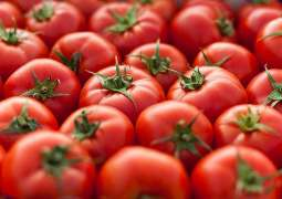 Traders sell Sindhi, Swati tomato at par with Iranian tomato
