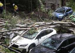 Severe Storm Sweeps Across Sydney, 48,000 Homes Without Power - Electricity Company