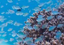 Most Mediterranean Countries Failing to Meet Minimum Marine Protection Commitments - NGO