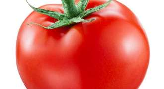 Farmers carry weapons to guard tomato fields in Badin