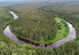 Greenpeace Laments Illegal Logging in Northern Russia's Newly-Established Nature Reserve