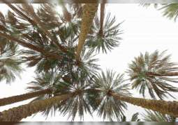 Palm tree added to UNESCO's 'Representative List of Intangible Cultural Heritage'