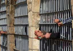 Seven Inmates Escape From Prison in Afghanistan's East - Paktia Governor's Spokesman