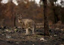 Forecast rain to bring both relief and new risks to fire-stricken Australia