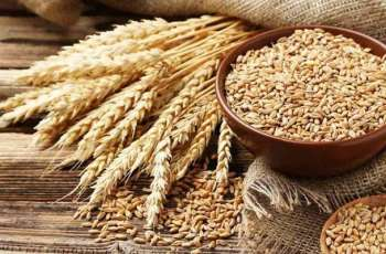 10.31 million tones wheat reserves  available in country
