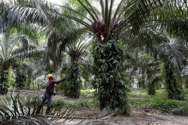 Indian, Malaysian ministers likely to discuss palm oil row on sidelines of WTO moot