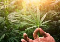 There could be a link between marijuana use and heart health