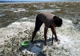 New initiative to protect seagrass ecosystem that supports millions of people