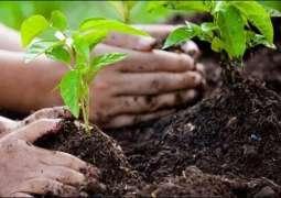 Rawalpindi Cantonment Baord to start spring tree plantation campaign from Feb 25