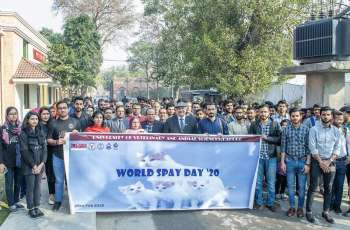 World Spay Day observed at UVAS