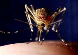 French Island Mayotte Records Over 2,400 Dengue Cases