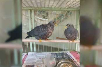 EPAA foils attempt to smuggle 146 endangered animals and birds