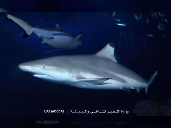 MOCCAE to lift seasonal fishing and trade ban on sharks
