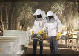 ADAFSA continues efforts to develop Emirati bee species