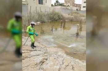 """""""تدوير"""" تكافح الآفات الناقلة للأمراض في المواقع الانشائية في أبوظبي"""
