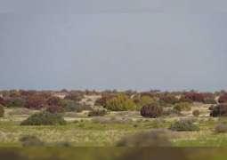 تقرير/ 49 محمية في الإمارات تشغل 15.5% من مساحة الدولة