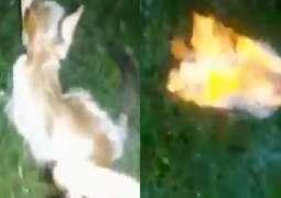 شاھد : شخص عدیم الرحمة یشعل النار في قطة صغیرة