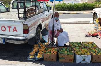 أسواق أملج تستقبل إنتاج مزارع المانجو