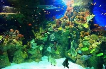 من الوجهات السياحية في المملكة .. متحف مائي يضم 7000 كائن بحري