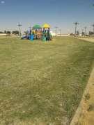 بلدية رفحاء تقوم بصيانة الألعاب في الحدائق العامة