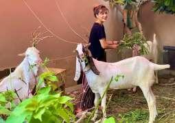 Mehwish Hayat mises her sacrificial animals
