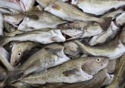 Up to 45% of World's Saltwater Fish Caught Illegally - Philippe Cousteau Jr.