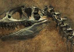 UK Paleontologists Discover Remains of Previously Unknown Species of Dinosaur - University