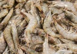 China Detects Traces of COVID-19 on Frozen Shrimps Packaging From Ecuador - State Media