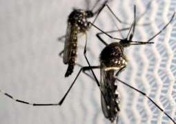 Nonprofits Alarmed at Planned Release of 750Mln Genetically Modified Mosquitoes in Florida