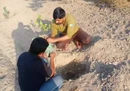Clean, Green Pakistan Movement: Kotla Androon Patrolling Police plant trees