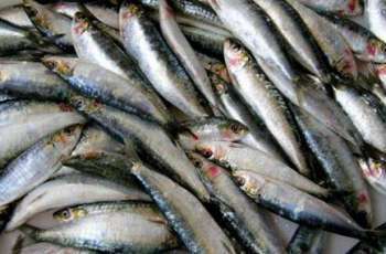 Sri Lanka Plans to Discuss Fish Exports With Russia's Agriculture Ministry - Ambassador